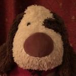 Profile picture of bungliemutt